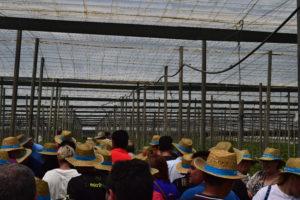 Agricultores. Presentación Jaleo F1