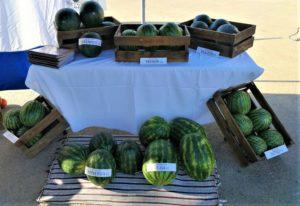 Watermelon Murcia