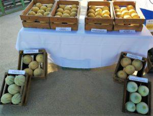 Melon Murcia